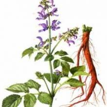 四川丹参提取物现货价格 优质医用以融水丹参精华植物提取物