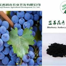 厂家直销   蓝莓花青素  5%  国标