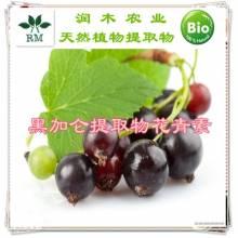 植物提取物花青素系列-黑加仑提取物  花青素   25%