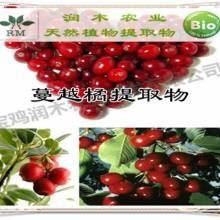 植物提取物厂家供应-蔓越莓提取物原花青素10%
