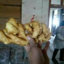 山东生姜产地多少钱一斤