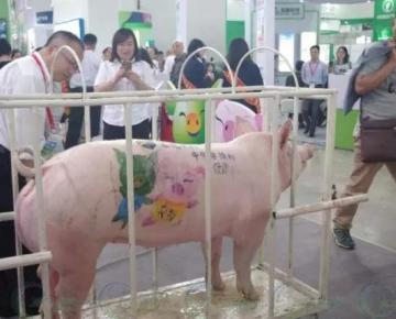 2018年第六届武汉畜牧业交易展会